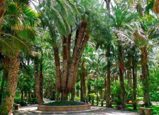 el-palmeral, Palm Groves, Elche