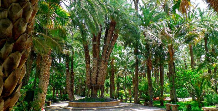 el-palmeral, Palm Groves, Elche