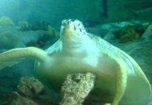 Sea Life, Benalmadena