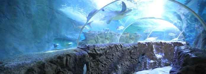 Sea Life Ocean Tunnel