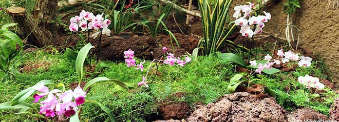 Casa de las Orquídeas , Palmitos Park