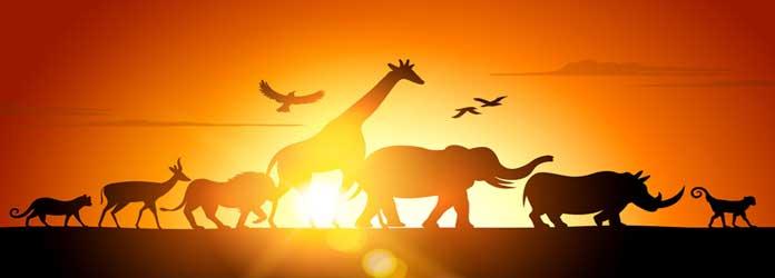 Safari Zoo, Sa Coma