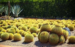 Jardín de Cactus, Algar