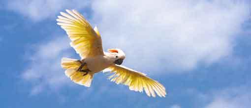 Aves, Palmitos Park
